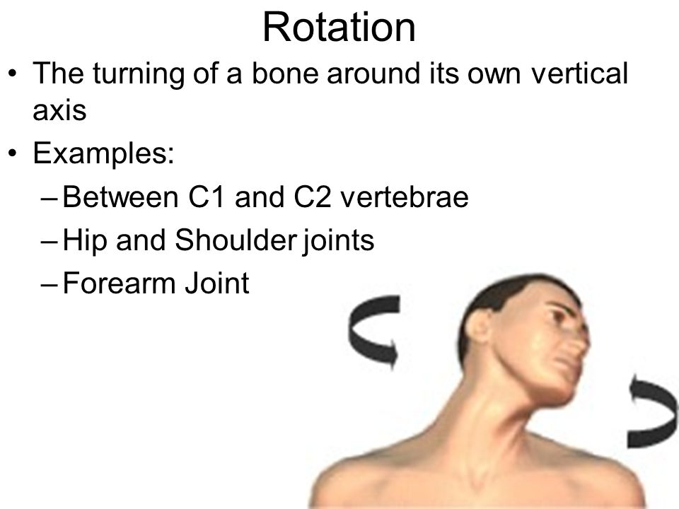 Rotation The turning of a bone around its own vertical axis Examples: