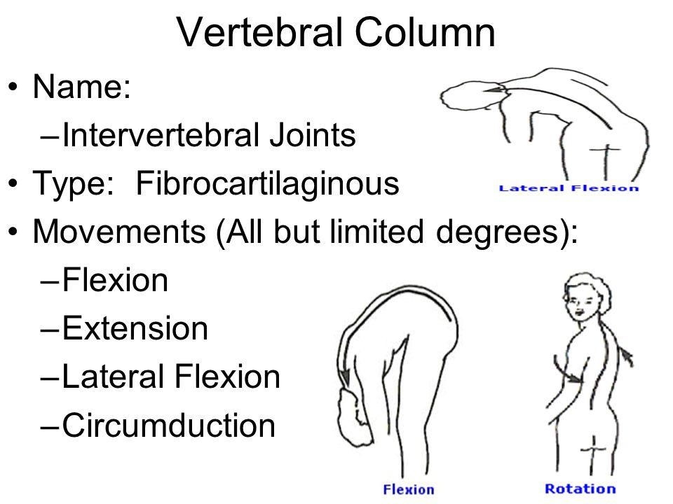 Vertebral Column Name: Intervertebral Joints Type: Fibrocartilaginous