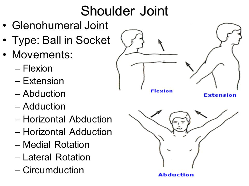 Shoulder Joint Glenohumeral Joint Type: Ball in Socket Movements: