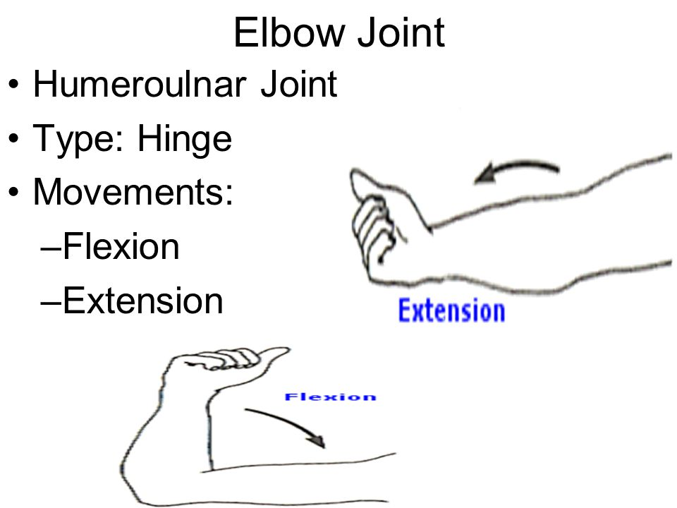 Elbow Joint Humeroulnar Joint Type: Hinge Movements: Flexion Extension