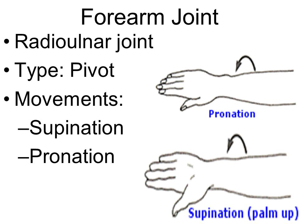 Forearm Joint Radioulnar joint Type: Pivot Movements: Supination