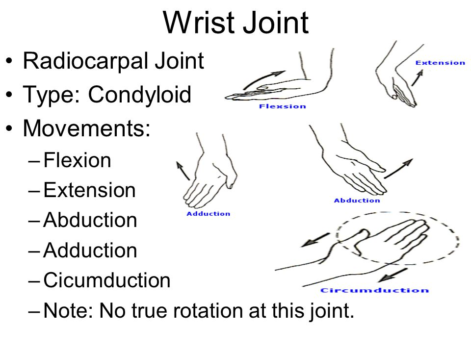 Wrist Joint Radiocarpal Joint Type: Condyloid Movements: Flexion