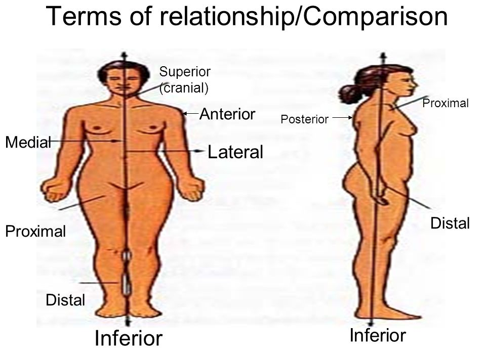 Terms of relationship/Comparison