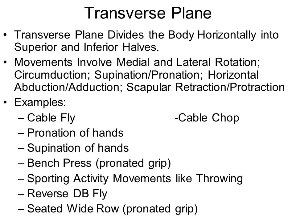 Transverse Plane Transverse Plane Divides the Body Horizontally into Superior and Inferior Halves.