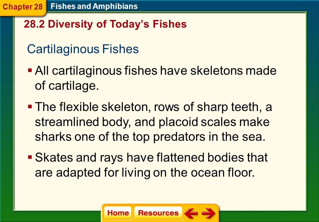 All cartilaginous fishes have skeletons made of cartilage.