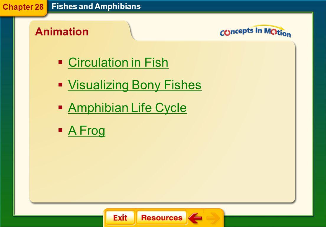 Visualizing Bony Fishes Amphibian Life Cycle A Frog
