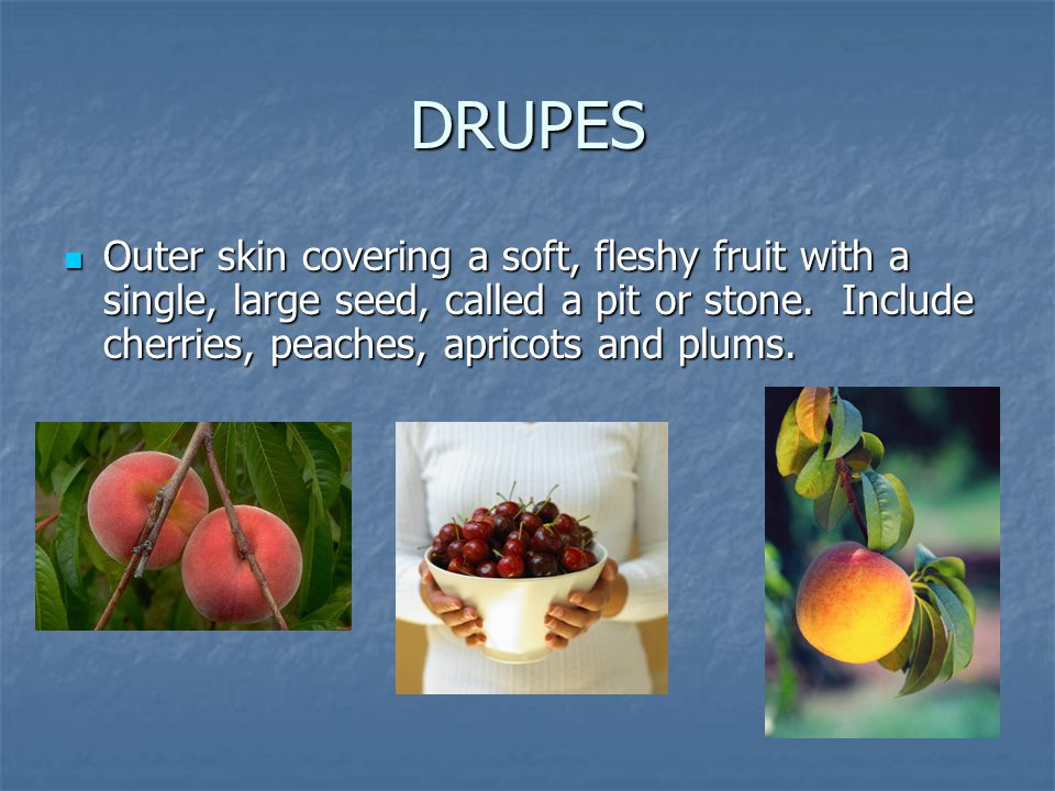 DRUPES Outer skin covering a soft, fleshy fruit with a single, large seed, called a pit or stone.