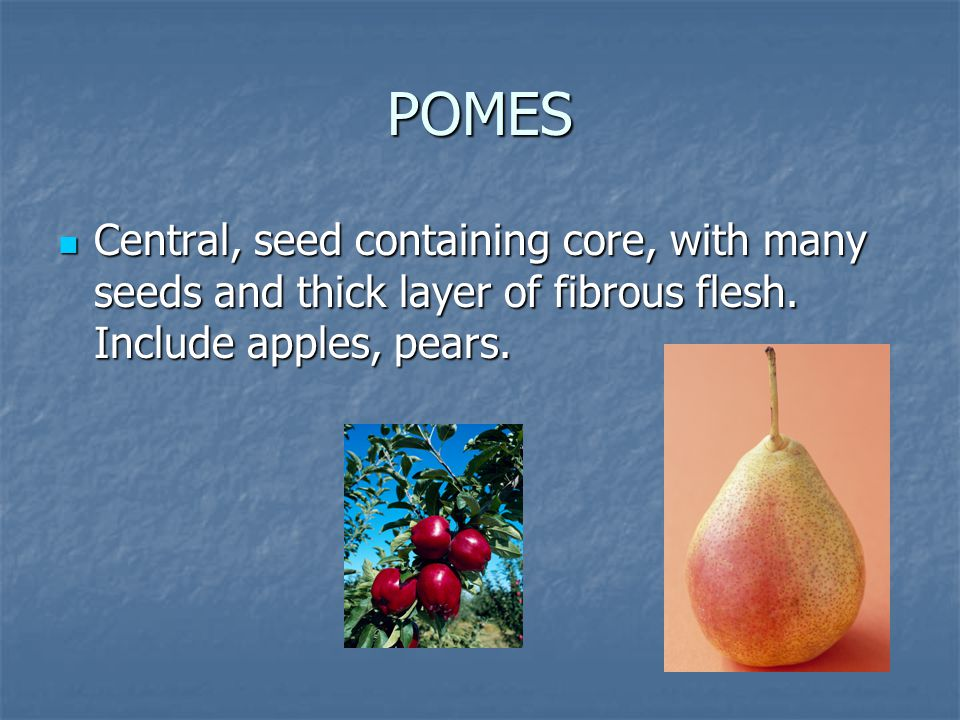 POMES Central, seed containing core, with many seeds and thick layer of fibrous flesh.