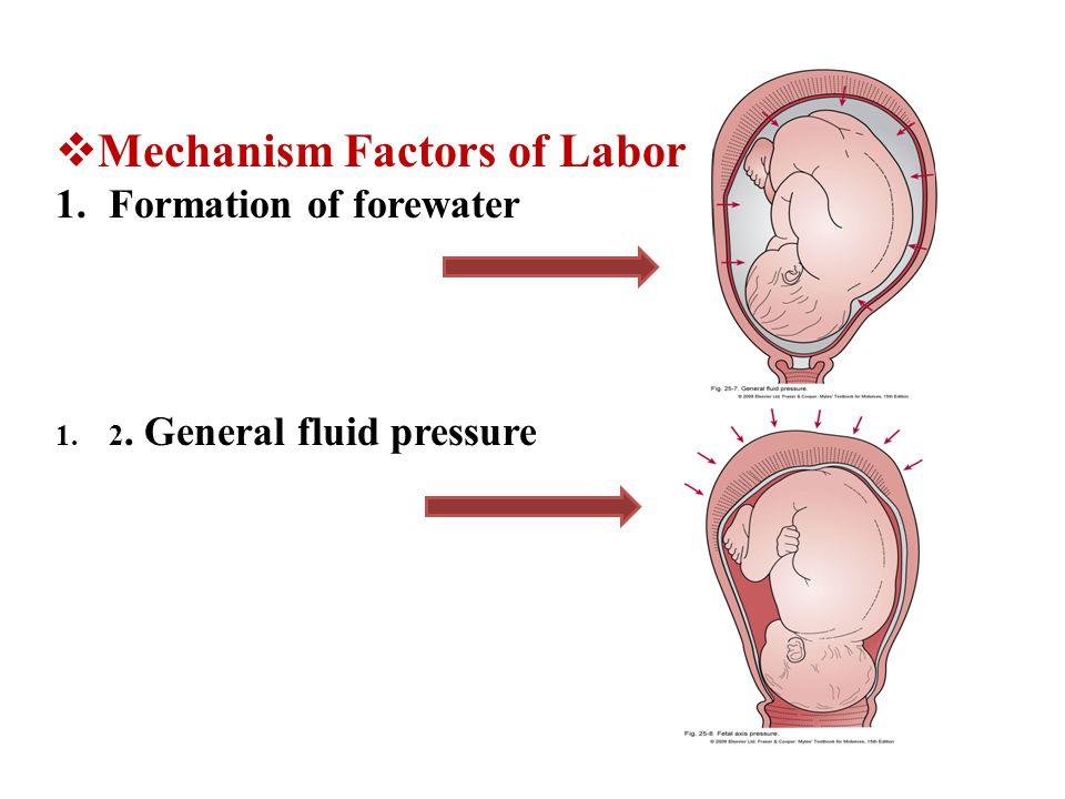 Mechanism Factors of Labor