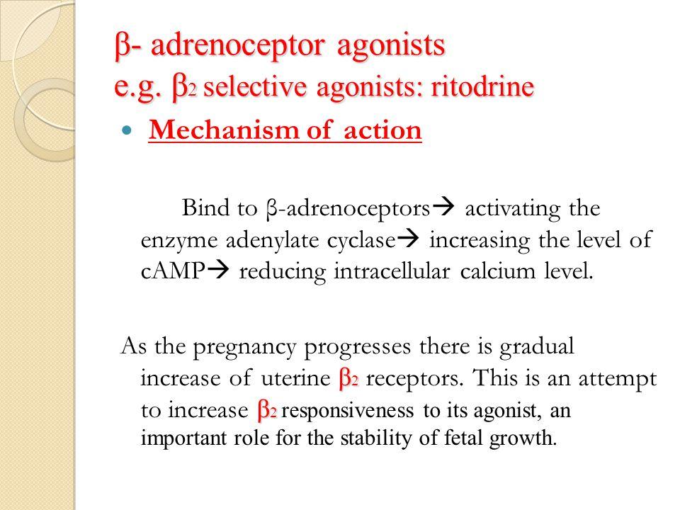 β- adrenoceptor agonists e.g. β2 selective agonists: ritodrine