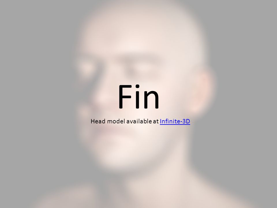 Fin Head model available at Infinite-3D
