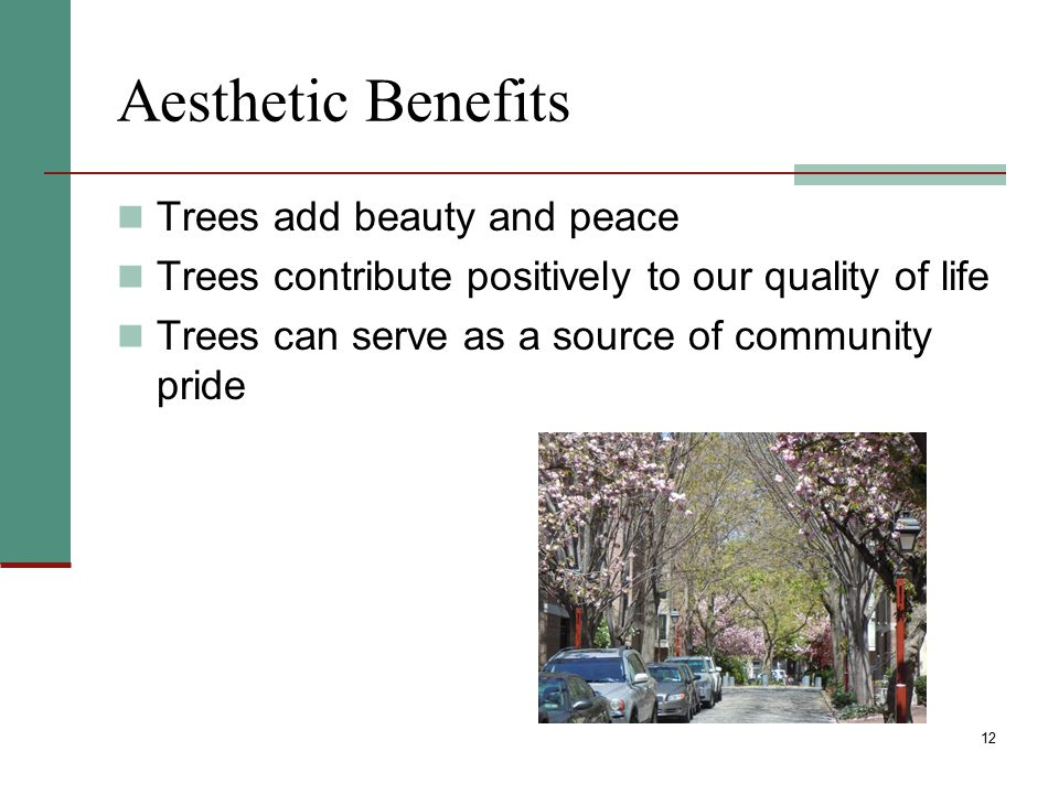 Aesthetic Benefits Trees add beauty and peace