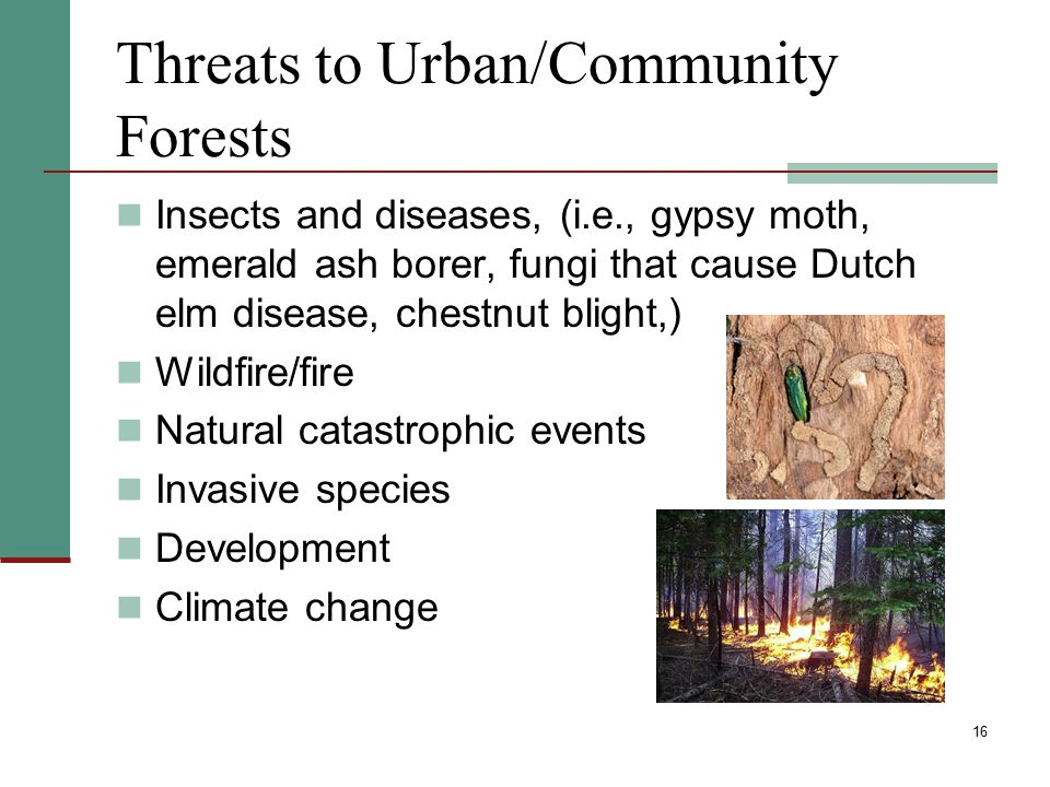 Threats to Urban/Community Forests