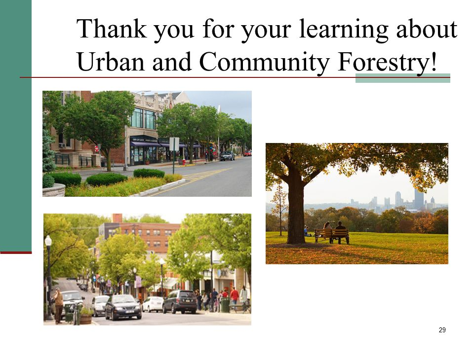 Thank you for your learning about Urban and Community Forestry!