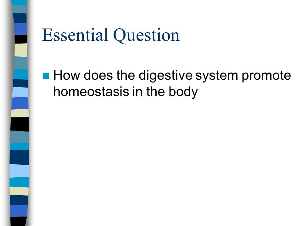Essential Question How does the digestive system promote homeostasis in the body
