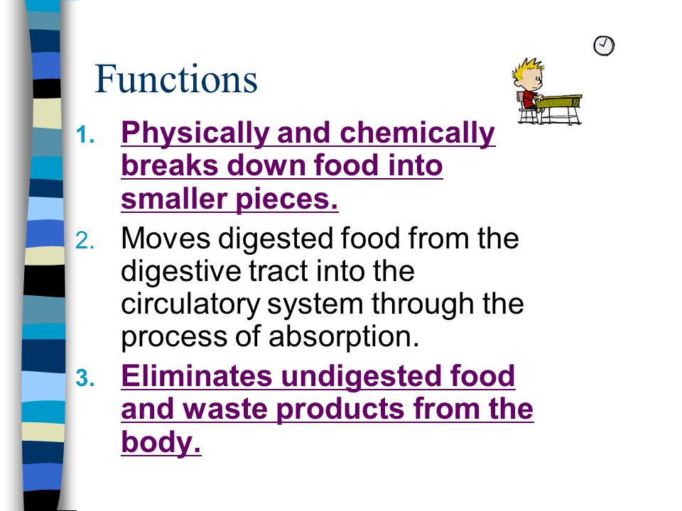 Functions Physically and chemically breaks down food into smaller pieces.