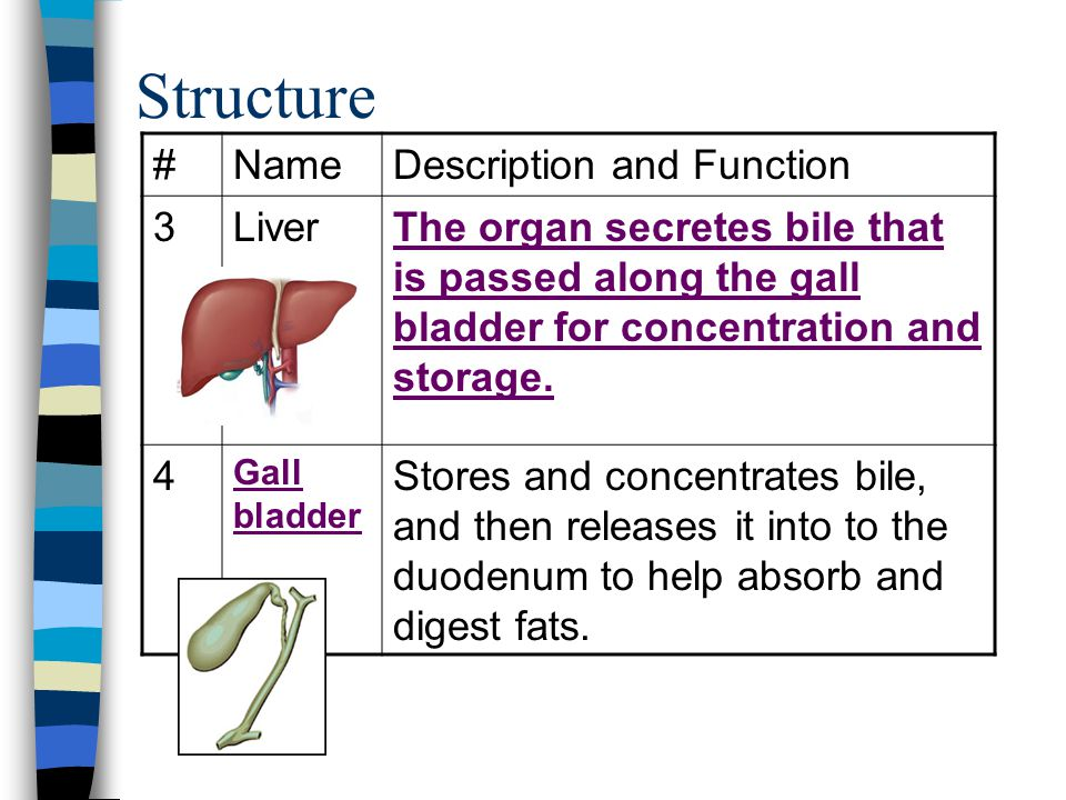 Structure # Name Description and Function 3 Liver