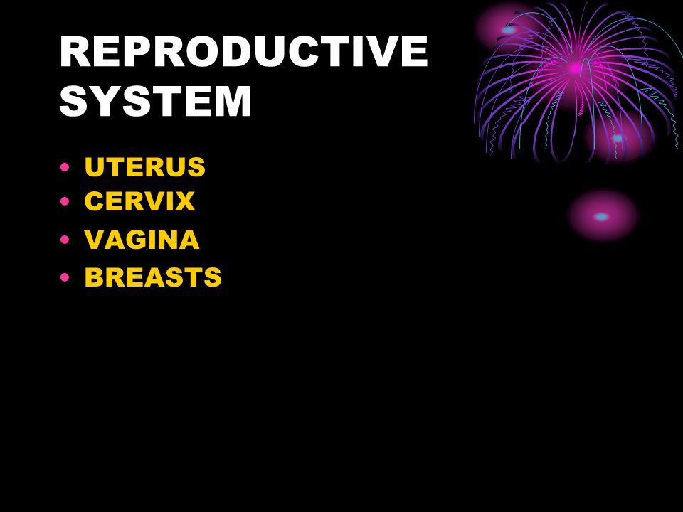 REPRODUCTIVE SYSTEM UTERUS CERVIX VAGINA BREASTS