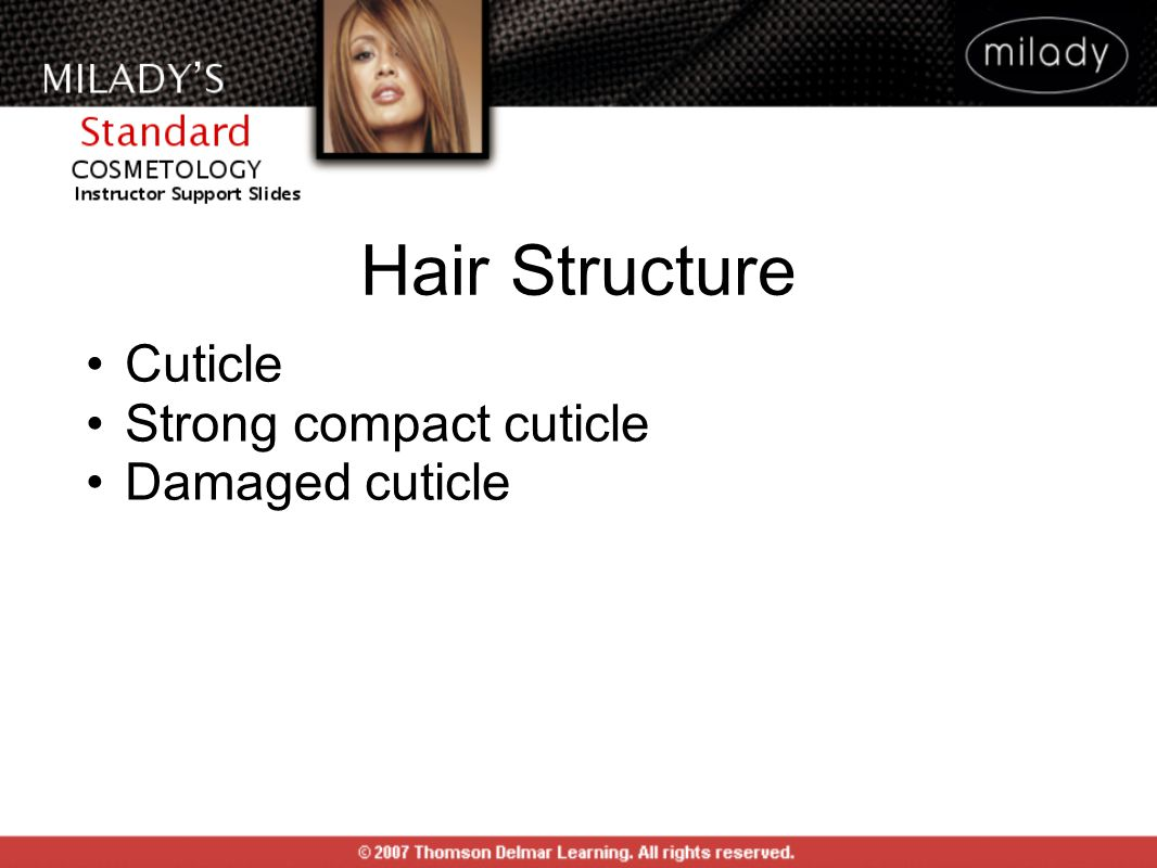 Cuticle Strong compact cuticle Damaged cuticle