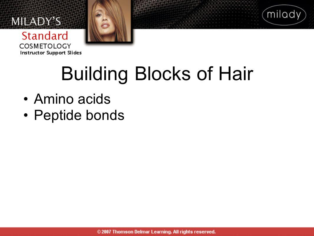 Building Blocks of Hair