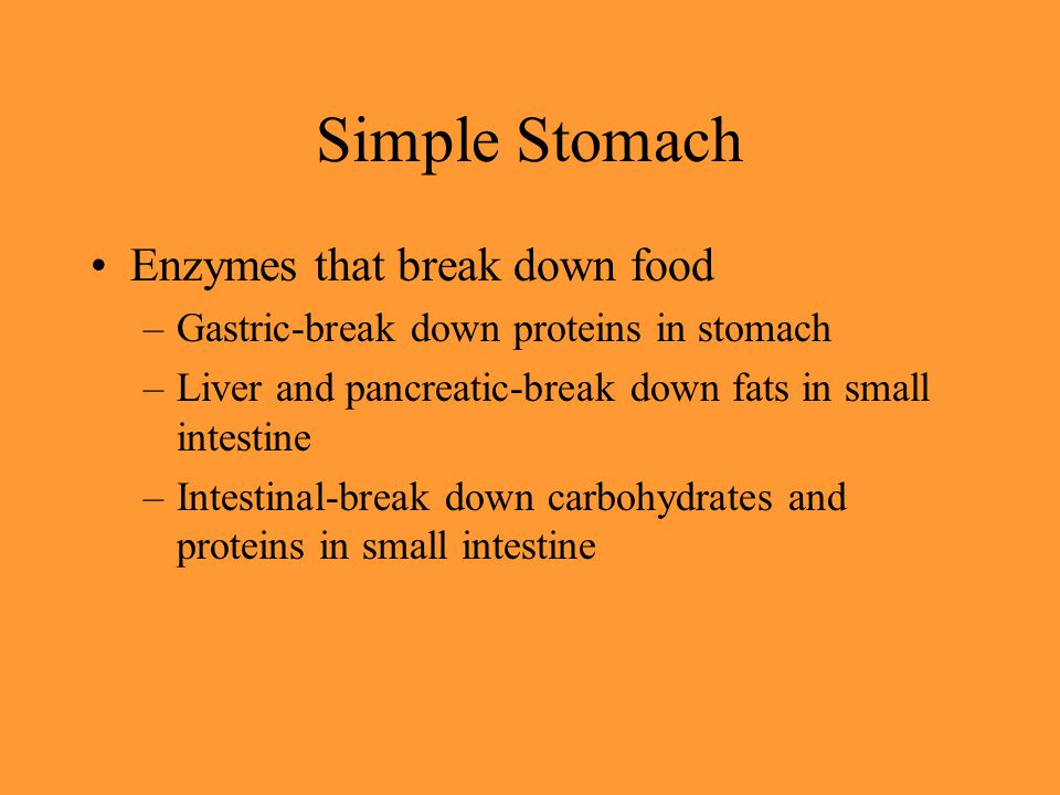 Simple Stomach Enzymes that break down food