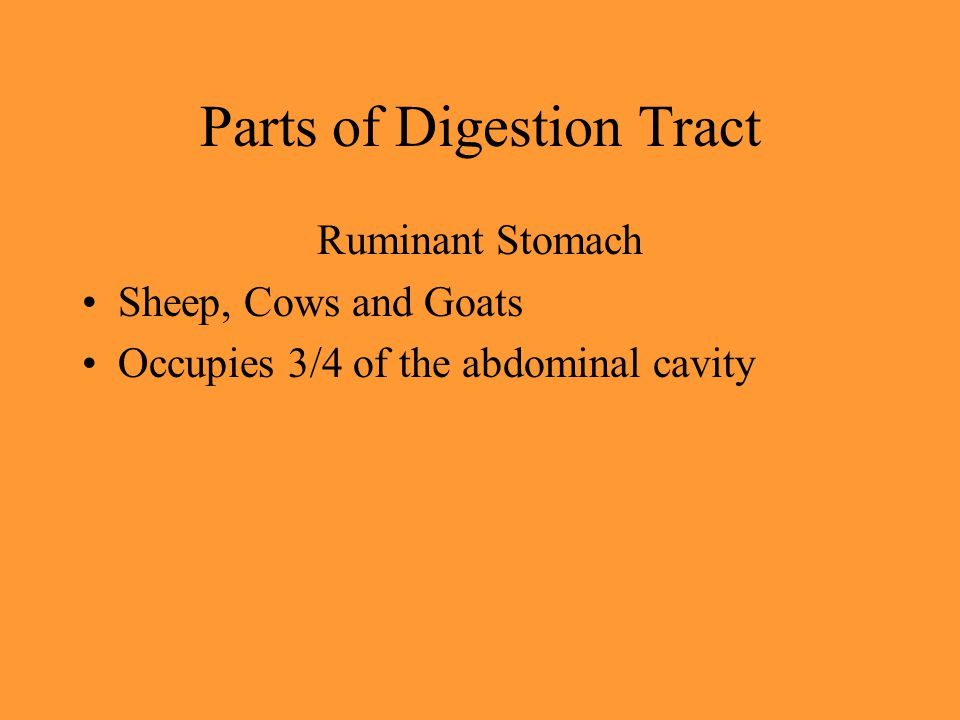 Parts of Digestion Tract