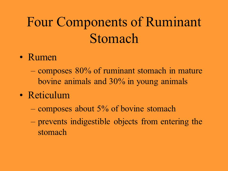 Four Components of Ruminant Stomach