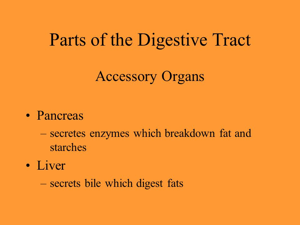 Parts of the Digestive Tract