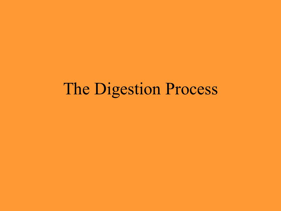 The Digestion Process