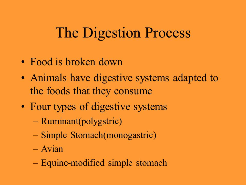 The Digestion Process Food is broken down