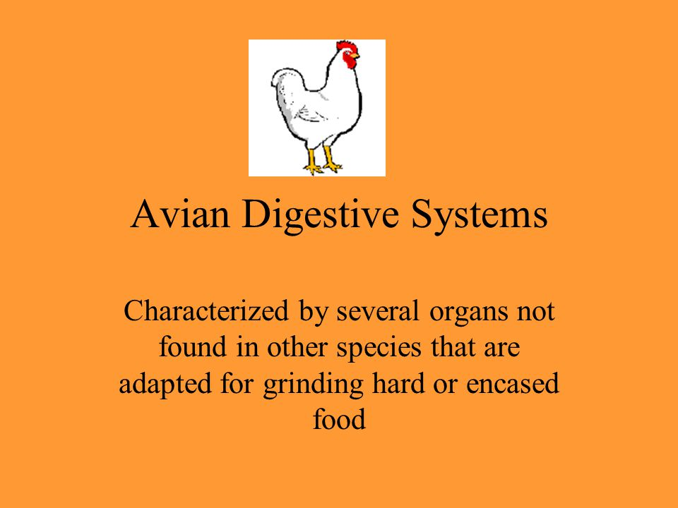 Avian Digestive Systems