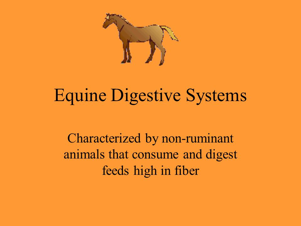 Equine Digestive Systems