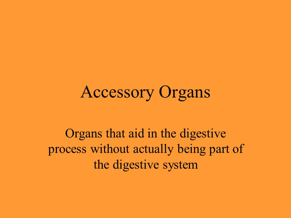 Accessory Organs Organs that aid in the digestive process without actually being part of the digestive system.