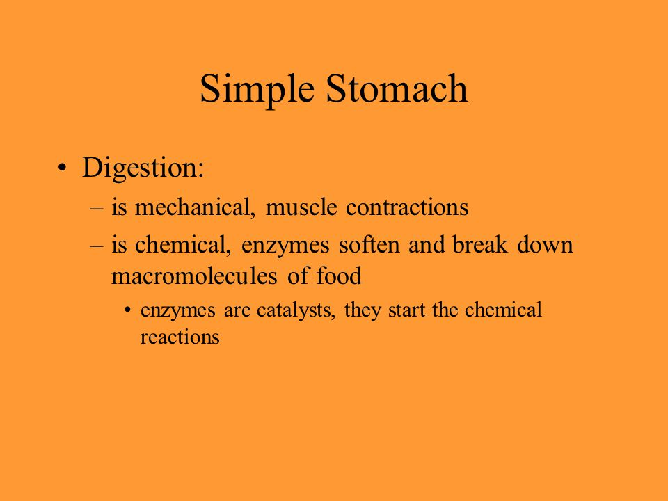 Simple Stomach Digestion: is mechanical, muscle contractions
