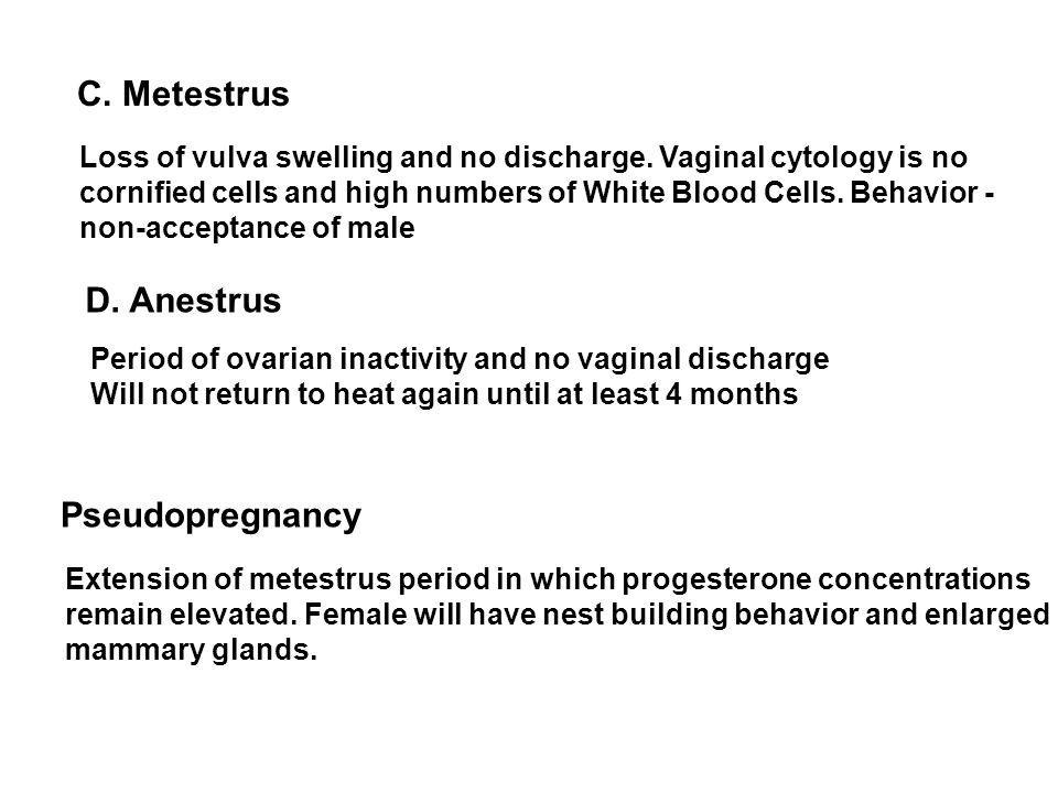 C. Metestrus D. Anestrus Pseudopregnancy