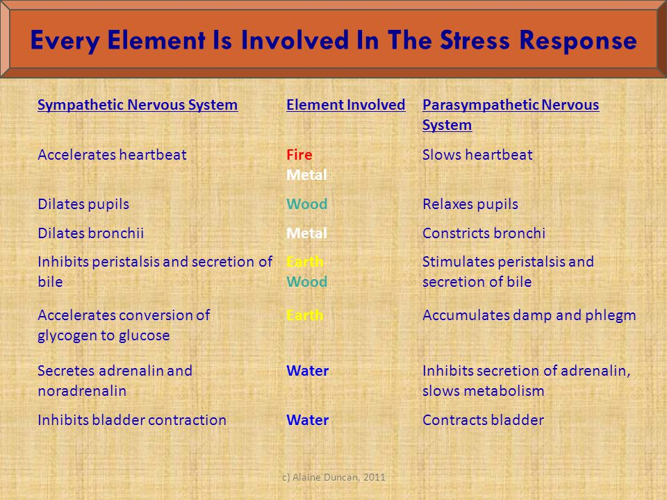 Every Element Is Involved In The Stress Response