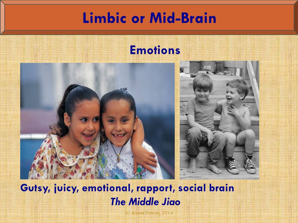 Limbic or Mid-Brain Emotions