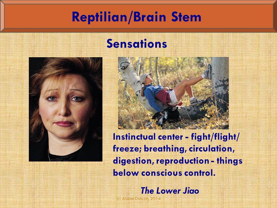 Reptilian/Brain Stem Sensations
