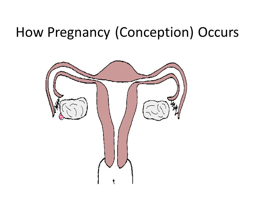 How Pregnancy (Conception) Occurs