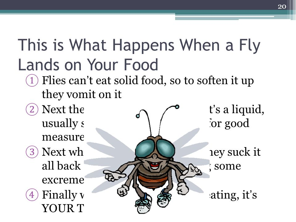 This is What Happens When a Fly Lands on Your Food