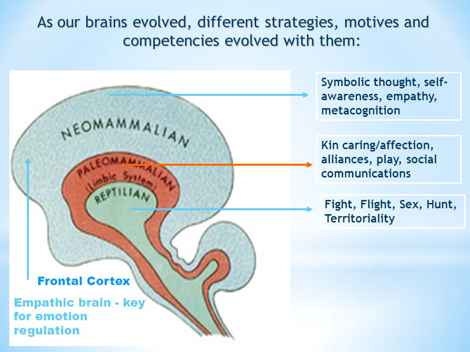 As our brains evolved, different strategies, motives and competencies evolved with them: