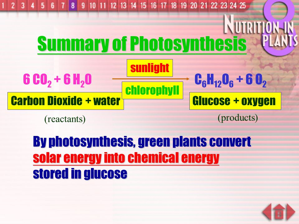 Summary of Photosynthesis