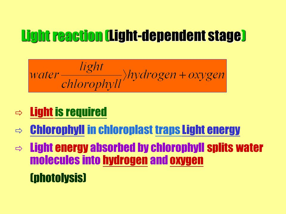Light reaction (Light-dependent stage)