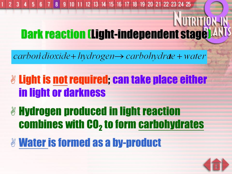 Dark reaction (Light-independent stage)