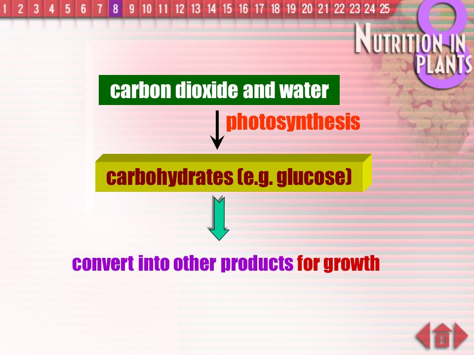 carbon dioxide and water