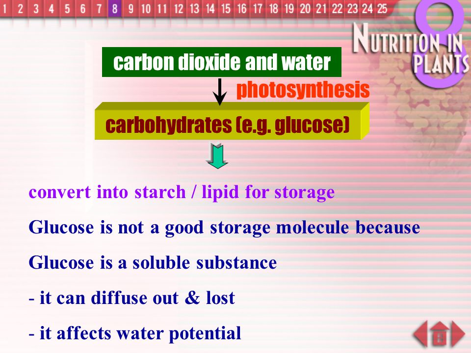 carbon dioxide and water photosynthesis