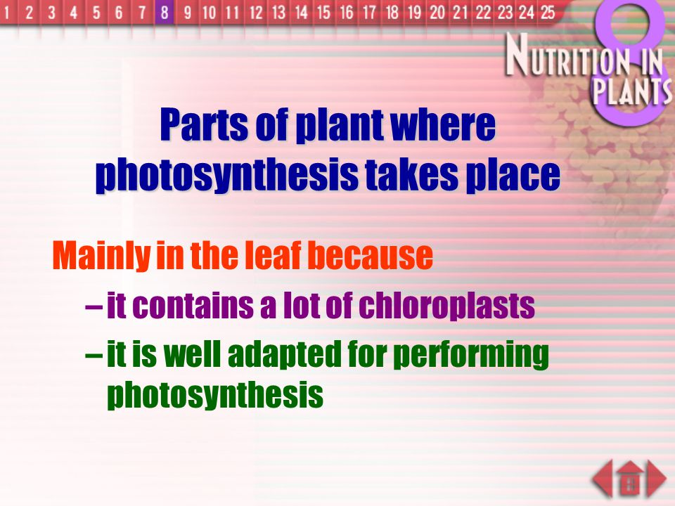 Parts of plant where photosynthesis takes place