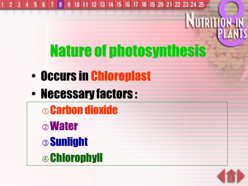 Nature of photosynthesis