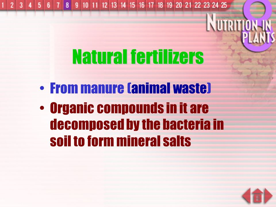 Natural fertilizers From manure (animal waste)