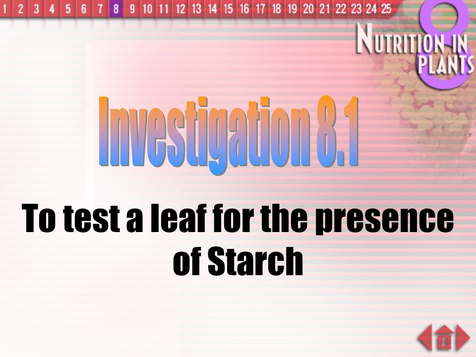 To test a leaf for the presence of Starch